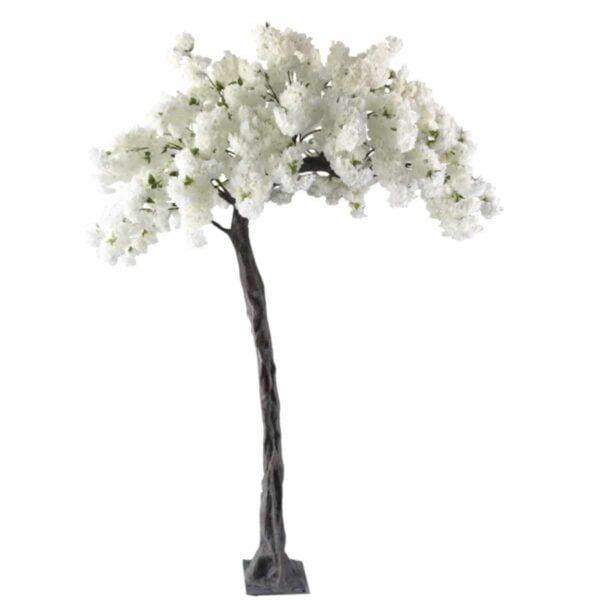 Arbre-cerisier